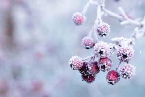 Emjay's Prairie Berries